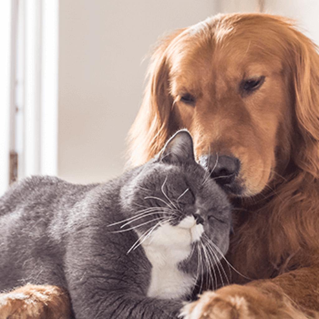 Newsletters - Woodlawn Veterinary Hospital Pet News & Food Recalls